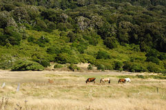 Flock av hästar i en naturlig prärie royaltyfri bild