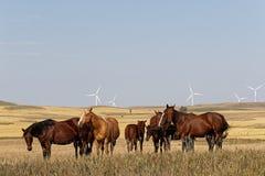 Flock av hästar i ett landskap av slättar i North Dakota arkivbild