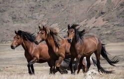 Flock av hästar på en bakgrund av berg arkivbilder
