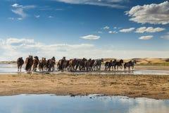 Flock av hästar på en brunnsort arkivfoton