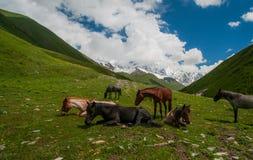 Flock av hästar på ett grönt fält i bergen. Fotografering för Bildbyråer