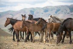 Flock av hästar som betar i en äng royaltyfri foto