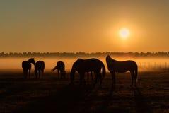 Flock av hästar som betar i ett fält på en bakgrund av dimma royaltyfri foto