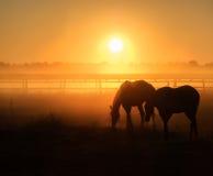 Flock av hästar som betar i ett fält på en bakgrund av dimma och soluppgång Arkivbild