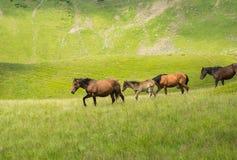 Flock av hästar som promenerar en bergäng Fotografering för Bildbyråer