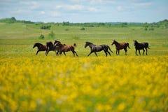 Flock av hästarna i fältet arkivfoton