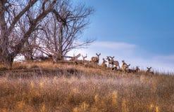 Flock av hjortar under ett träd Royaltyfria Foton