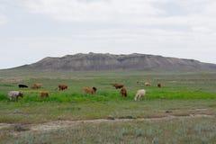 Flock av kor på bakgrunden av berg Arkivbilder