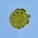 Flock av kor på vårgräsplanfältet royaltyfri fotografi