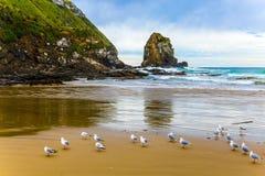 Flock av kormoran royaltyfria foton