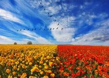 Flock av kranar som flyger över fält Fotografering för Bildbyråer