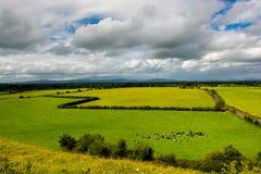 Flock av nötkreatur i landskap av Tipperary i Irland Arkivfoto