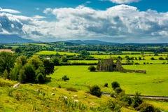 Flock av nötkreatur i landskap av Tipperary i Irland royaltyfri bild