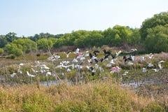 Flock av olika vadande fåglar Fotografering för Bildbyråer