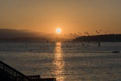 Flock av seagulls över havet på solnedgången Arkivbilder