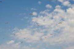 Flock av Seagulls royaltyfri bild