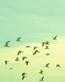 Flock av Seagulls royaltyfria foton