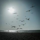 Flock av Seagulls arkivbild