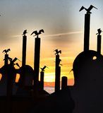Flock av Seagulls Royaltyfri Foto