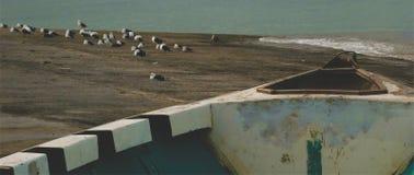 Flock av seagulls på hamnen royaltyfri fotografi