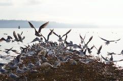 Flock av seagulls på spottad arkivbild