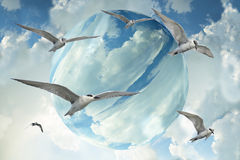 Flock av seagulls som flyger över blå himmel Arkivbilder