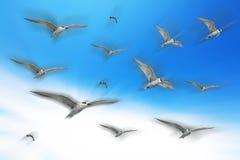 Flock av seagulls som flyger över blå himmel royaltyfria bilder