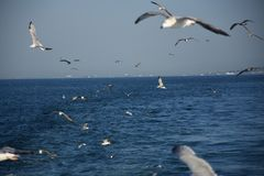 Flock av seagulls som flyger över skeppet Royaltyfri Bild