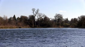 Flock av Seagulls som landar på den amerikanska floden lager videofilmer