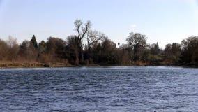 Flock av Seagulls som tar flyg i avståndsamerikanfloden stock video