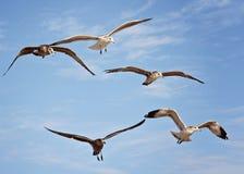 Flock av Seagullsmakroskottet på stranden arkivbild