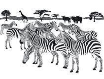 Flock av sebror stock illustrationer