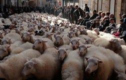 Flock av sheeps på St Anthony djur som välsignar dag Arkivbilder