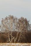 Flock av skogshönset Siberia Ryssland Royaltyfri Fotografi
