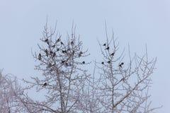 Flock av snowbirds arkivbilder