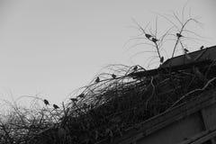 Flock av sparvar arkivfoto