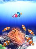 Flock av standarda clownfish och en färgrik fisk Royaltyfri Bild