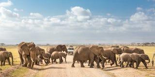 Flock av stora lösa elefanter som korsar smutsroadi i den Amboseli nationalparken, Kenya Arkivfoton