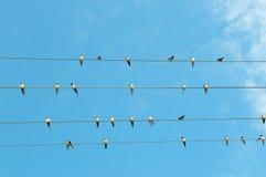 Flock av svalor på blå himmel Royaltyfri Fotografi