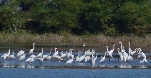 Flock av våtmarkfåglar på dammet royaltyfri fotografi