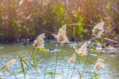 Flock av vattenfågeln royaltyfria bilder