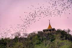 Flock of bat flying through golden pagoda to hunting food. At evening Royalty Free Stock Image