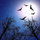 Flock of bats above the trees at night time. Royalty Free Stock Image