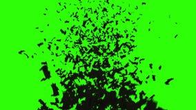 Flock of bats. flock of birds. mystical halloween concept. green screen footage.