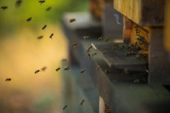 A flock of bees flying into hive royalty free stock image