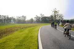 Flock of bicyclists on asphalt road in sunny winter afternoon Stock Images