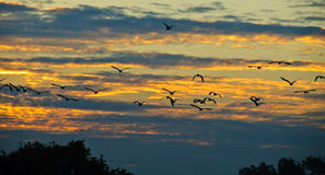 Flock of bid Stock Images