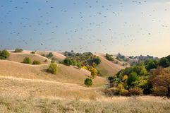 The flock of the bird circles above the sand dunes royalty free stock photography