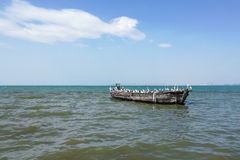 A flock of bird on very old fishing boat in the sea Stock Photography