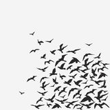 FLOCK OF BIRDS. Vector background of a birds' flock Royalty Free Stock Photography